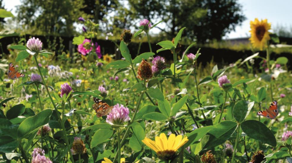 Campagne 'Meer biodiversiteit, help jij ook een handje?'