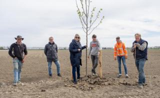 Wethouder Sedee helpt bomen planten bij windsingel